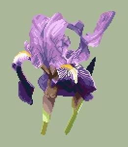 Iris des jardins diagramme noir et blanc