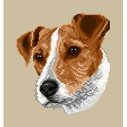 Jack russell diagramme couleur