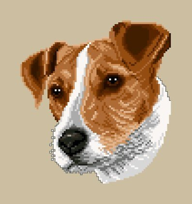 Jack russell diagramme couleur .pdf