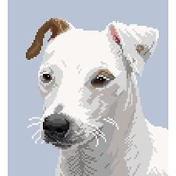 Jack russell II diagramme couleur