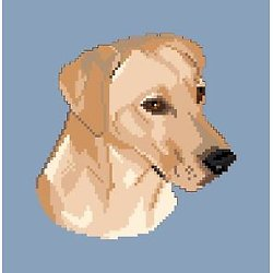 Labrador blond diagramme noir et blanc