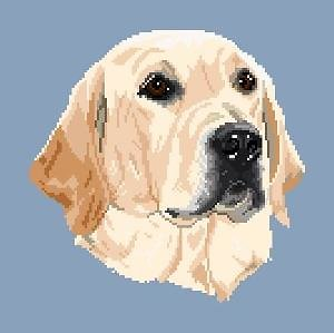Labrador blond II diagramme couleur