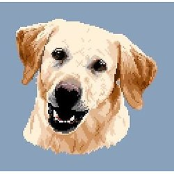 Labrador blond III diagramme couleur