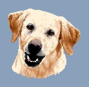 Labrador blond III diagramme noir et blanc
