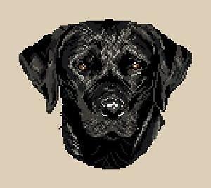 Labrador noir diagramme noir et blanc
