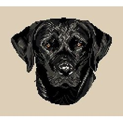 Labrador noir diagramme noir et blanc .pdf