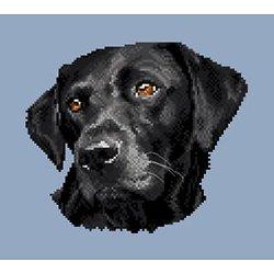 Labrador noir II diagramme couleur