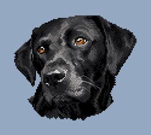 Labrador noir II diagramme noir et blanc