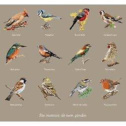 Les oiseaux de mon jardin diagramme couleur