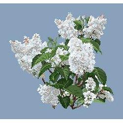 Lilas blanc diagramme couleur