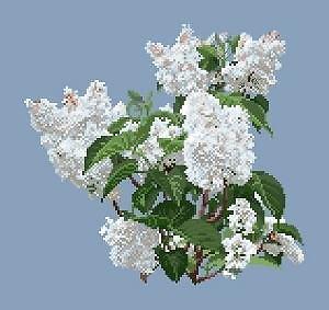 Lilas blanc diagramme noir et blanc