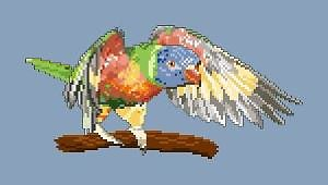 Loriquet arc-en-ciel diagramme couleur