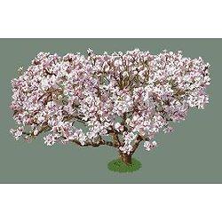 Magnolia diagramme noir et blanc
