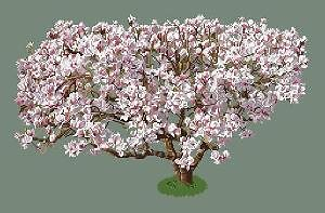 Magnolia diagramme noir et blanc .pdf