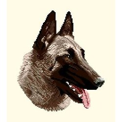 Malinois diagramme couleur