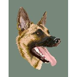 Malinois II diagramme couleur