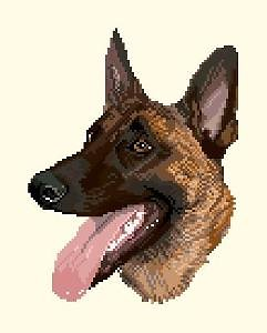 Malinois III diagramme couleur