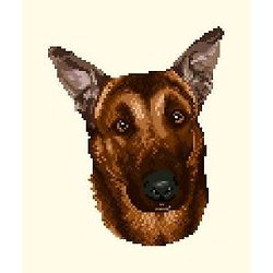 Malinois IV diagramme couleur