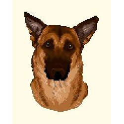 Malinois V diagramme couleur