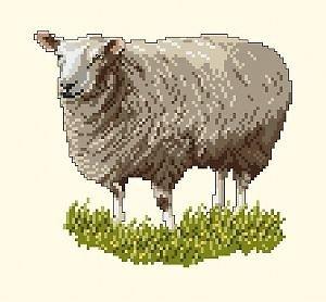Mouton diagramme couleur