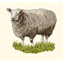 Mouton diagramme couleur .pdf