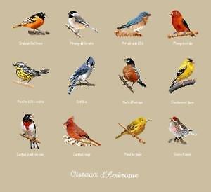 Oiseaux d'Amérique diagramme couleur