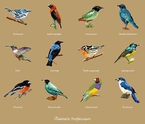 Oiseaux tropicaux diagramme couleur