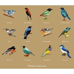 Oiseaux tropicaux diagramme couleur .pdf