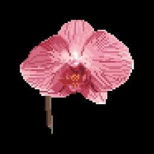 Orchidée rose diagramme noir et blanc