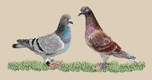 Pigeons voyageurs diagramme noir et blanc