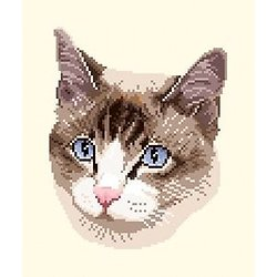 Portrait de chat diagramme couleur .pdf
