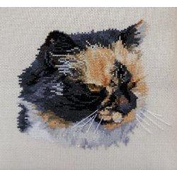 Portrait de chat V diagramme couleur