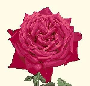 Portrait de rose diagramme noir et blanc