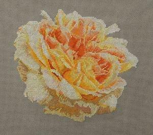 Portrait de rose II diagramme couleur