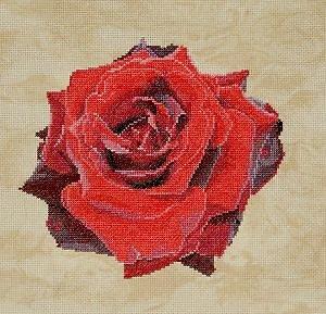 Portrait de rose III diagramme couleur
