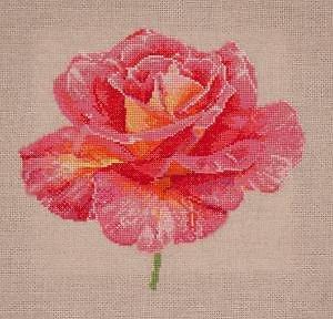Portrait de rose IV diagramme couleur