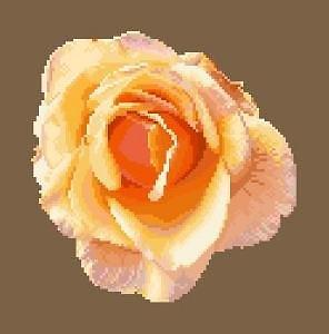 Portrait de rose V diagramme noir et blanc
