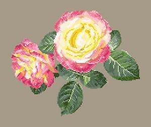 Portrait de rose VI diagramme couleur .pdf