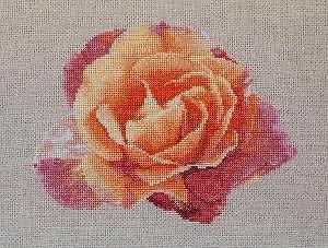 Portrait de rose VII diagramme couleur