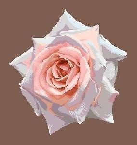 Portrait de rose X diagramme noir et blanc
