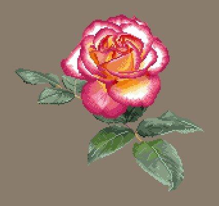 Portrait de rose XIII diagramme couleur .pdf