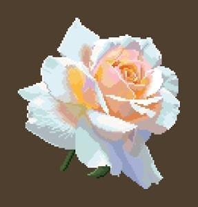 Portrait de rose XV diagramme couleur .pdf
