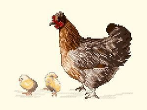 Poule et poussins diagramme couleur