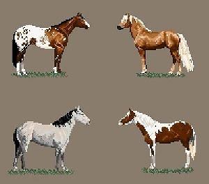 Races de chevaux américaines diagramme couleur