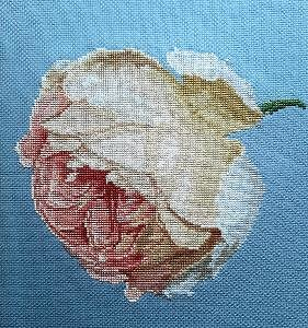 """Rose """"Nostalgie"""" diagramme couleur"""