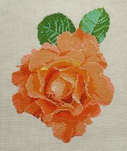"""Rose """"Pudeur"""" diagramme couleur"""