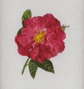 Rose de Provins II diagramme noir et blanc