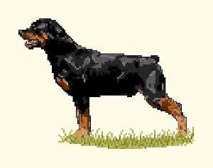 Rottweiler diagramme couleur