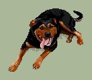 Rottweiler II diagramme couleur