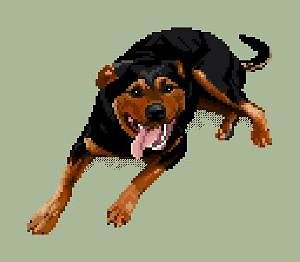 Rottweiler II diagramme couleur .pdf
